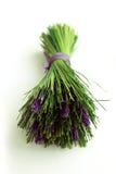 Μια δέσμη lavender ανθίζει σε ένα άσπρο υπόβαθρο Στοκ εικόνες με δικαίωμα ελεύθερης χρήσης