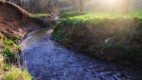 Μια ήρεμη ροή του rivulet Ramenka Το φως του ήλιου άνοιξη ενεργοποίησης ξυπνά τη φύση απόθεμα βίντεο