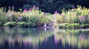 Μια λίμνη κρίνων!!! Στοκ φωτογραφία με δικαίωμα ελεύθερης χρήσης