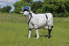 Μια αγελάδα που φορά ένα μπέιζ-μπώλ ομοιόμορφο Στοκ Φωτογραφία