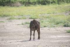 Μια αγελάδα στον τομέα Στοκ φωτογραφίες με δικαίωμα ελεύθερης χρήσης