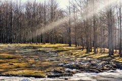 Μια ακτίνα του φωτός στο δάσος Στοκ Φωτογραφίες