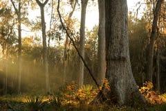 Μια ακτίνα του φωτός στοκ εικόνες με δικαίωμα ελεύθερης χρήσης
