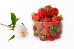 Μια ακόμα-ζωή των φραουλών σε ένα γυαλί και ένα peony λουλούδι μόριο Στοκ Εικόνες