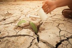 Μια ανάπτυξη δέντρων στο ραγισμένο έδαφος Ξηρό χώμα ρωγμών στην ξηρασία, που επηρεάζεται της σφαιρικής θερμαίνοντας γίνοντης κλιμ στοκ εικόνα