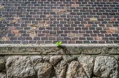 Μια ανάπτυξη εγκαταστάσεων από έναν σχηματισμό βράχου στη Βουδαπέστη Στοκ Φωτογραφίες