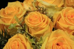 Μια ανθοδέσμη των θαυμάσιων κίτρινων τριαντάφυλλων Στοκ Εικόνες