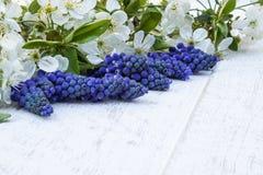 Μια ανθοδέσμη των μπλε κουδουνιών στους λευκούς, ξύλινους πίνακες, με τα άσπρα λουλούδια του κερασιού, των κουδουνιών E στοκ φωτογραφία με δικαίωμα ελεύθερης χρήσης