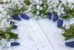 Μια ανθοδέσμη των μπλε κουδουνιών στους λευκούς, ξύλινους πίνακες, με τα άσπρα λουλούδια του κερασιού, των κουδουνιών E στοκ φωτογραφίες