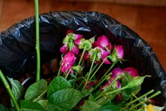 Μια ανθοδέσμη των παλαιών κόκκινων τριαντάφυλλων σε ένα μαύρο δοχείο σκουπιδιών στοκ εικόνες