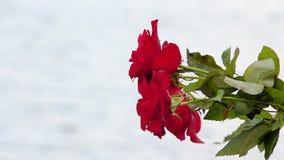 Μια ανθοδέσμη των τριαντάφυλλων στα χέρια σε ένα υπόβαθρο του νερού απόθεμα βίντεο