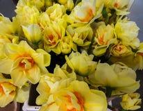 Μια ανθοδέσμη των φρέσκων daffodils σε ένα βάζο στοκ φωτογραφίες με δικαίωμα ελεύθερης χρήσης