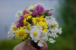 Μια ανθοδέσμη των wildflowers Στοκ φωτογραφίες με δικαίωμα ελεύθερης χρήσης