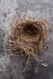Μια απλή φωλιά πουλιών σε ένα γκρίζο υπόβαθρο στοκ εικόνα