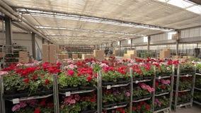 Μια αποθήκη εμπορευμάτων με τα ζωηρόχρωμα λουλούδια Το πανόραμα μιας μεγάλης αποθήκης εμπορευμάτων με τα ανθίζοντας λουλούδια, άν φιλμ μικρού μήκους