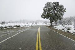 Μια απομονωμένη ανάπτυξη δέντρων κατά μήκος ενός οδοστρώματος Στοκ φωτογραφία με δικαίωμα ελεύθερης χρήσης