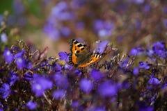 Μια απομονωμένη πεταλούδα σε ένα νεκρό λουλούδι Στοκ φωτογραφίες με δικαίωμα ελεύθερης χρήσης