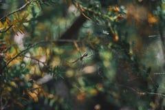 μια αράχνη μεταξύ των θάμνων Στοκ φωτογραφίες με δικαίωμα ελεύθερης χρήσης