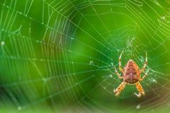 Μια αράχνη που περιμένει ένα θήραμα Στοκ Φωτογραφία