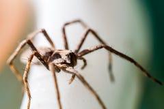 Μια αράχνη που σέρνεται στο λευκό Στοκ εικόνες με δικαίωμα ελεύθερης χρήσης