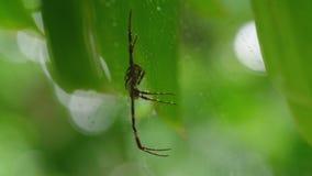 Μια αράχνη σε το Ιστός ` s απόθεμα βίντεο
