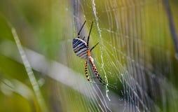Μια αράχνη Στοκ Εικόνα