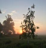 Μια αύξηση μιας νέας ημέρας - μόνη σημύδα Στοκ φωτογραφίες με δικαίωμα ελεύθερης χρήσης
