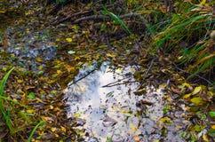 Μια βαλτώδης τάφρος με το νερό και τη δέσμη των κίτρινων πεσμένων φύλλων φθινοπώρου στοκ εικόνες με δικαίωμα ελεύθερης χρήσης