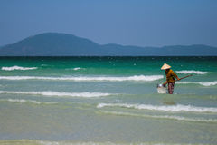 Μια βιετναμέζικη γυναίκα συλλέγει τα κοχύλια θάλασσας στην ακτή σε Nha Trang, Βιετνάμ Στοκ Φωτογραφία