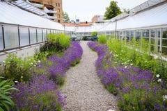 Μια βοτανική Στοκ εικόνες με δικαίωμα ελεύθερης χρήσης