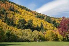 Μια βουνοπλαγιά που καλύπτεται στα φύλλα φθινοπώρου σε Arrowtown Στοκ Εικόνες