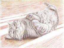 Μια βρετανική γάτα Στοκ εικόνες με δικαίωμα ελεύθερης χρήσης