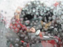 Μια βροχερή ημέρα στο δρόμο με το αγαπημένο σκυλί σας στοκ φωτογραφία