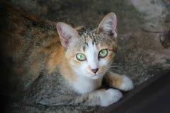 Μια γάτα αμφιβολίας που εξετάζει τη κάμερα Στοκ Εικόνες