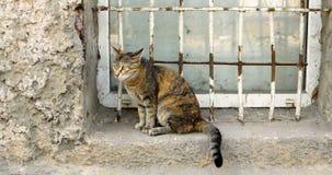 Μια γάτα βαμβακερού υφάσματος σε ένα παράθυρο ενός του χωριού σπιτιού απόθεμα βίντεο