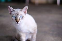 Μια γάτα εξετάζει τη κάμερα Στοκ Φωτογραφίες