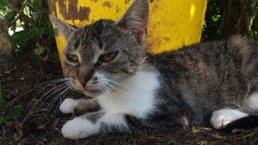 Μια γάτα εξετάζει το φακό Στοκ Εικόνα