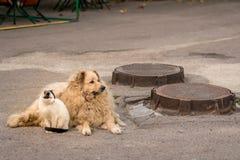 Μια γάτα και ένα σκυλί κάθονται μαζί στο πεζοδρόμιο στοκ εικόνες