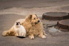 Μια γάτα και ένα σκυλί κάθονται μαζί στο πεζοδρόμιο στοκ φωτογραφίες