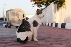 Μια γάτα κοιτάζει επίμονα ενώ σε μια συνεδρίαση θέστε στοκ εικόνα με δικαίωμα ελεύθερης χρήσης