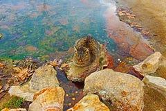 Μια γάτα κοντά στα ορυκτά νερά σε Rupite στη νοτιοδυτική Βουλγαρία στοκ εικόνες