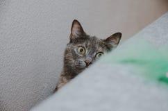 Μια γάτα κρυφοκοιτάζει έξω από πίσω από τον καναπέ Στοκ Εικόνες