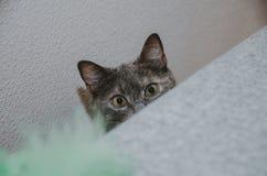 Μια γάτα κρυφοκοιτάζει έξω από πίσω από τον καναπέ Στοκ εικόνα με δικαίωμα ελεύθερης χρήσης