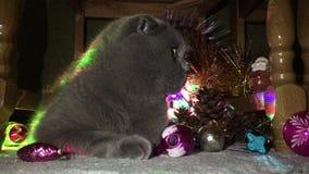 Μια γάτα μεταξύ των διακοσμήσεων Χριστουγέννων φιλμ μικρού μήκους