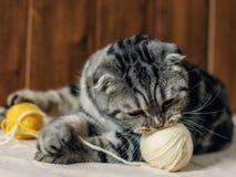 Μια γάτα με μια σφαίρα του νήματος στοκ εικόνες με δικαίωμα ελεύθερης χρήσης