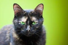 Μια γάτα με τα πράσινα μάτια Στοκ φωτογραφία με δικαίωμα ελεύθερης χρήσης