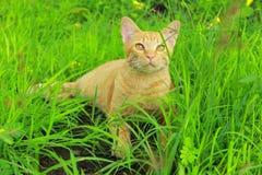 Μια γάτα με το πράσινο υπόβαθρο Στοκ εικόνα με δικαίωμα ελεύθερης χρήσης