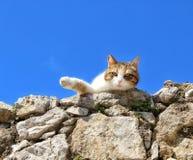 Μια γάτα ξαπλώνει στοκ εικόνες