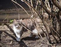 Μια γάτα οδών περπατά πίσω από τον κλάδο δέντρων στον ήλιο στοκ εικόνα