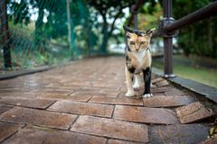 Μια γάτα οδών Malacca, Μαλαισία στοκ εικόνες